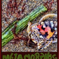 OS-CarolSchlesinger-Metamorphosis