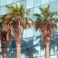 OS-ChrisKibre-Med-Center-Trees