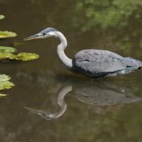 OS-Gary-Larsen-Bird-Reflextion