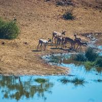 OS-Willis-Zhoe-Deers-in-Africa.3
