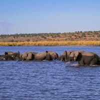 OS-Willis-Zhoe-Elephants-crossing-river-in-Africa.21