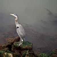 OS-dan-sarago-Egret