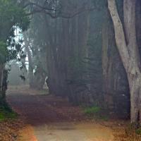OS-dan-sarago-Pathway