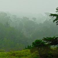 OS-dan-sarago-trees-in-fog