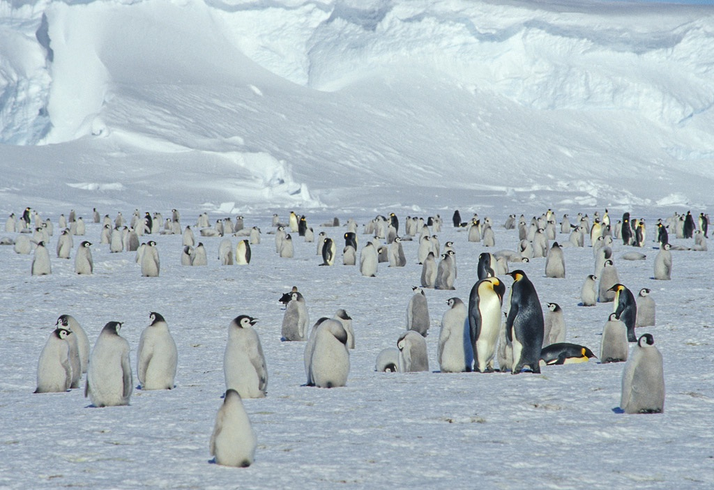 T3-Burr-Preston-No-name-Emperor-penguin-colony-No-3-Antarctica-es
